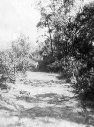 Lover's lane on Higdon's lease near Manyberries