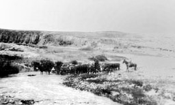 Mattie Higdon on horseback crossing the Lost River with cattle